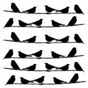 Rows of birds 195x 195 sold 3\'s